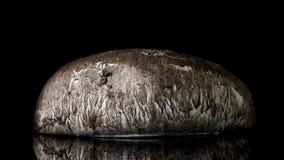 Portobello蘑菇 库存照片
