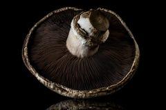 Portobello蘑菇 免版税库存图片