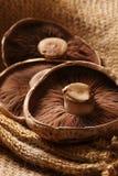 portobello μανιταριών Στοκ Φωτογραφίες