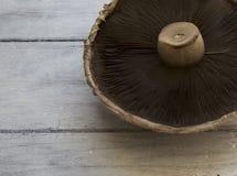 Portobello величает brunnescens Agaricus очень вкусное разнообразие гриба, они от такой же семьи как белый гриб стоковая фотография rf