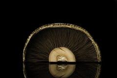 Portobello Стоковое Изображение RF
