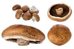 Portobello Mushroom (Agaricus bisporus) Stock Images