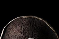 Portobello Mushroom. On a black background royalty free stock image