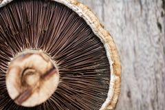 Portobello mushroom. Fresh Portobello mushroom on wood board stock photos