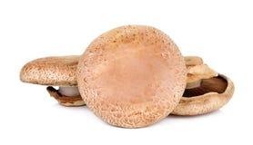 Portobello mushroom isolated on the white background.  royalty free stock photo