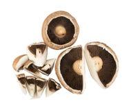 Portobello mushroom, portabella or portobella isolated on white. Background. Big brown sliced champignons with clipping path royalty free stock images