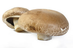 Portobello mushroom. On white background stock photography