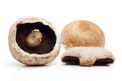 Portobello mushrooms. On white background Stock Photos