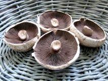 Portobello Mushrooms. In a basket Royalty Free Stock Photo