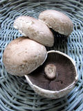 Portobello Mushrooms. In a basket Stock Photo