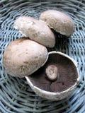 Portobello Mushrooms. In a basket stock photo