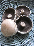 Portobello Mushrooms. In a basket Royalty Free Stock Photography