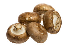 Portobello mushrooms isolated on white Royalty Free Stock Photos