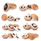 Portobello mushrooms isolated on white background.  Royalty Free Stock Images