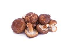 Portobello mushrooms isolated on white background. Portobello mushrooms isolated on white background Stock Images