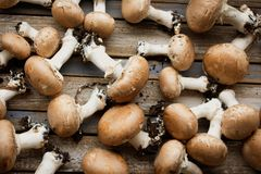 Portobello mushrooms on rustic wooden desk Royalty Free Stock Images
