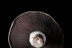 Portobello pieczarka Zdjęcie Royalty Free