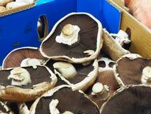 Portobello / Portabella Mushrooms Stock Photography