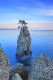 Portofino公园。 杉树岩石峭壁。 长的风险。 利古里亚,意大利 库存图片