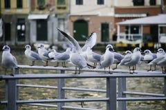 Portofino gull Stock Images