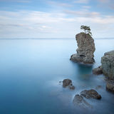 Portofino park. Pine tree rock. Long exposure. Royalty Free Stock Photography