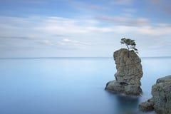 Portofino parkerar Sörja trädet vaggar klippan exponering long Liguria det royaltyfria bilder