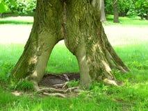 Portone dell'albero fotografia stock libera da diritti