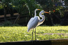 Portos de Aves Pássaros marinhos Fotos de Stock Royalty Free