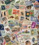 Portostämplar av djurlivet Royaltyfri Fotografi