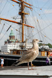 portowy seagull Obrazy Royalty Free
