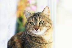 Porträt der netten nervösen Katze, die auf dem Fenster umgeben durch helle Kreise von hellem und weißem Tulle sitzt lizenzfreies stockbild