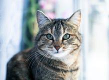 Porträt der netten nervösen Katze, die auf dem Fenster umgeben durch helle Kreise von hellem und weißem Tulle sitzt stockfotografie