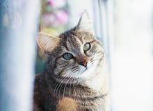 Porträt der netten nervösen Katze, die auf dem Fenster umgeben durch helle Kreise von hellem und weißem Tulle sitzt lizenzfreies stockfoto