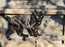 Porträt einer schwarzen Straßenkatze im Yard lizenzfreies stockbild
