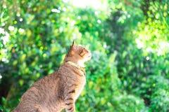 Porträt BeautifulÂ-Braunkatze, die Grün- und Boogiehintergrund sitzt und schaut Stockfotos