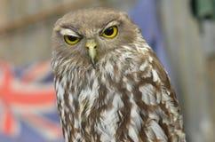 Porträt, das Owl Australia abstreift Lizenzfreie Stockfotografie