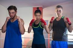 Porträt der überzeugten Frau unter den männlichen Boxern, die in kämpfender Position stehen Lizenzfreie Stockfotografie