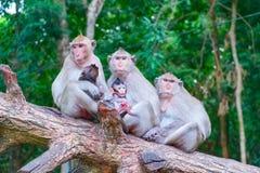 Porträt der Affefamilie Stockfotografie