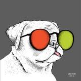 Porträt der Bulldogge in den farbigen Gläsern Auch im corel abgehobenen Betrag Stockfotos