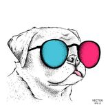 Porträt der Bulldogge in den farbigen Gläsern Auch im corel abgehobenen Betrag Stockfotografie