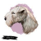 Porträt der digitalen Kunstillustration des Lakeland-Terrierhaustieres Reinrassiges Säugetiertier von BRITISCHEM See Bezirk in En lizenzfreie abbildung