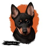 Porträt der digitalen Kunstillustration lancashire heeler Haustieres Nahaufnahme des Haustiersäugetiertieres mit kleiner Mündung  stock abbildung