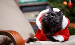 Porträt der festlichen Katze in Sankt-Kostüm, das am Stuhl sitzt Stockbilder