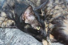Porträt der grünäugigen Katze Lizenzfreies Stockbild