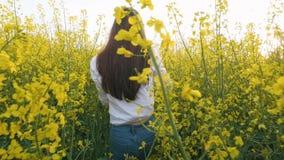 Porträt der hinteren Ansicht des jungen Mädchens gehend auf dem Rapsgebiet Langsame Bewegung stock video footage