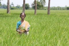 Porträt der indischen alten Frau stockfoto