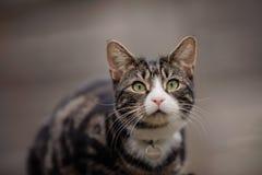 Porträt der jungen getigerter Katze und der weißen Katze Lizenzfreie Stockfotos