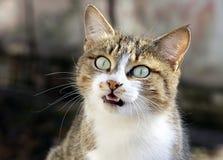 Porträt der Katze Lizenzfreie Stockfotografie