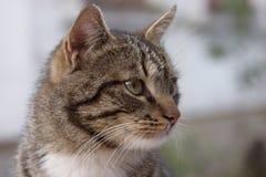 Porträt der Katze Stockfotografie