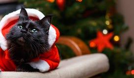 Porträt der Katze des neuen Jahres in Sankt-Kostüm, das am Stuhl sitzt Stockfotografie